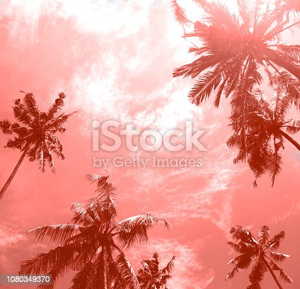 istock Palm tropical trees from bottom view to pure sky. 1080349370