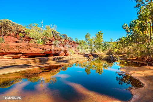 Red Cabbage Palm and rugged sandstone cliffs reflected on permanent waterhole in heart of Palm Valley, dry season in Finke Gorge National Park. Outback Safari in Northern Territory, Central Australia.