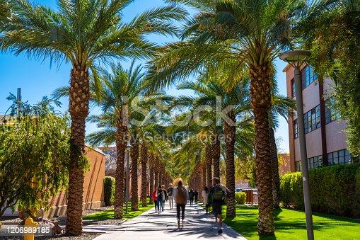 Palm Walk in Arizona State University campus in Tempe.