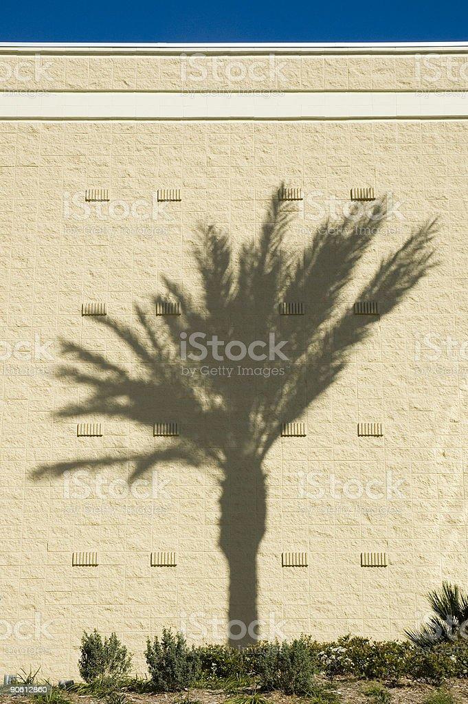 Palm wall royalty-free stock photo