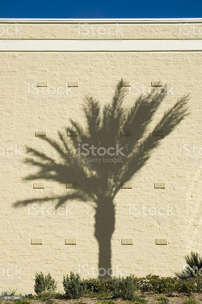 Palm wall stock photo