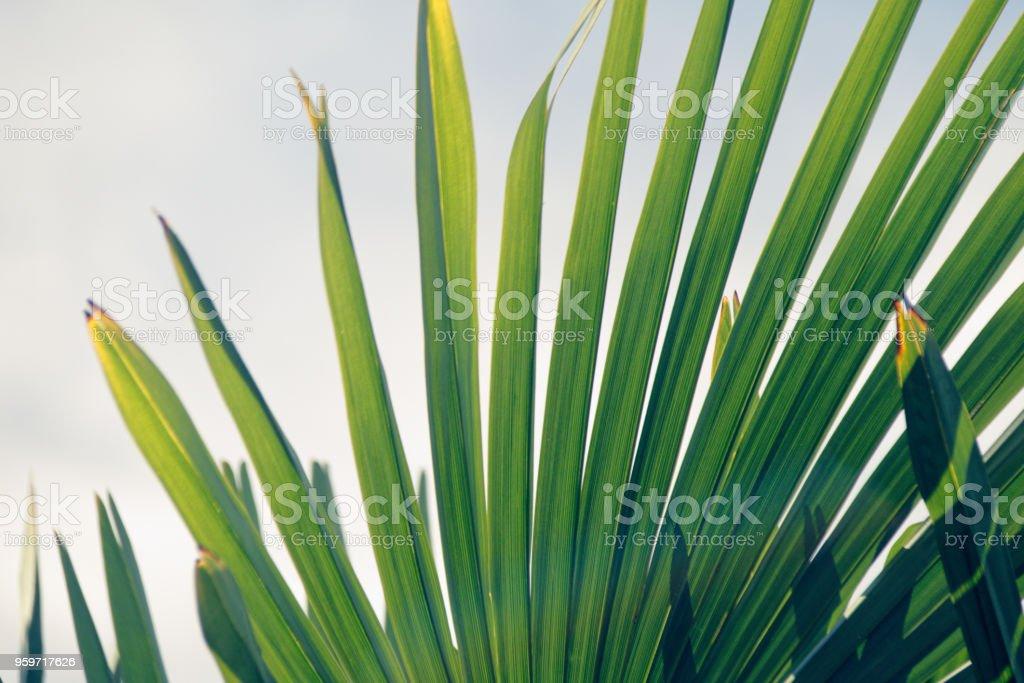 Palma - foto stock