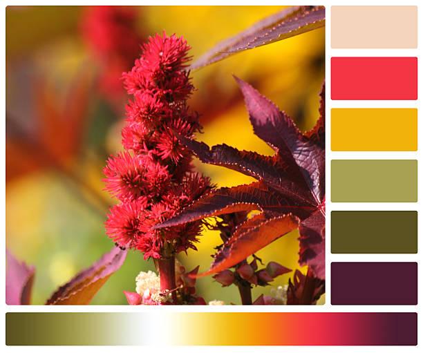 palmcrist цветок.  палитра с бесплатным цвет swatches - rbg стоковые фото и изображения