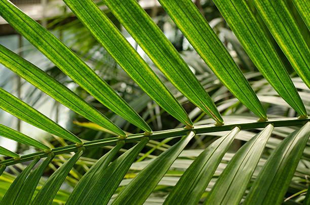 palme – Foto