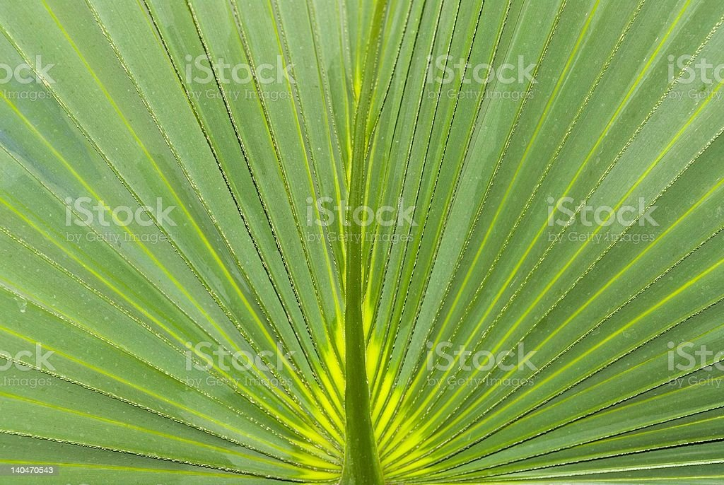 Palmenblatt royalty-free stock photo