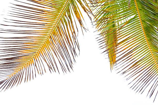 Palm off – Foto