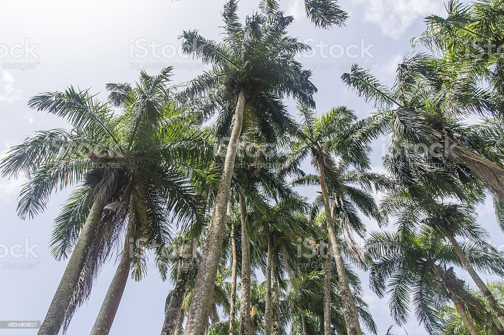 Palmentuin stock photo