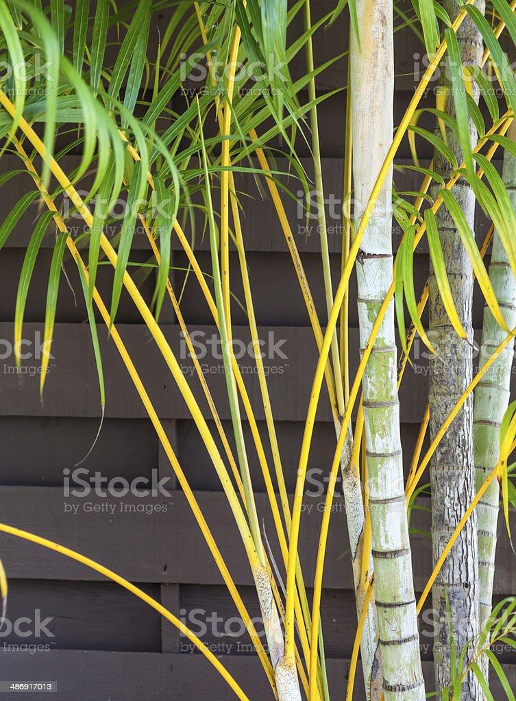 PalmFronds royalty-free stock photo