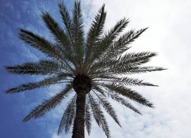 Palmier stock photo