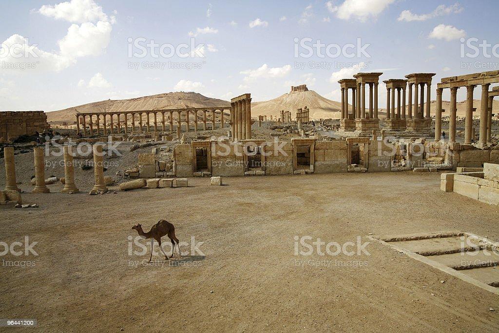 Palmira, a Síria. Сamel - Foto de stock de Arquitetura royalty-free