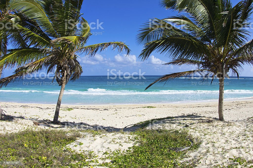 palms and  beach royalty-free stock photo