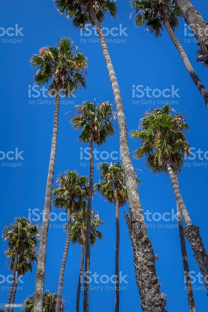 palms and blue sky stock photo