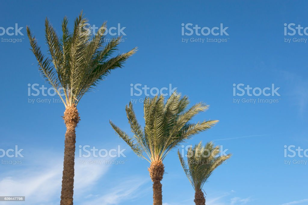 Palms and blue sky stock photo