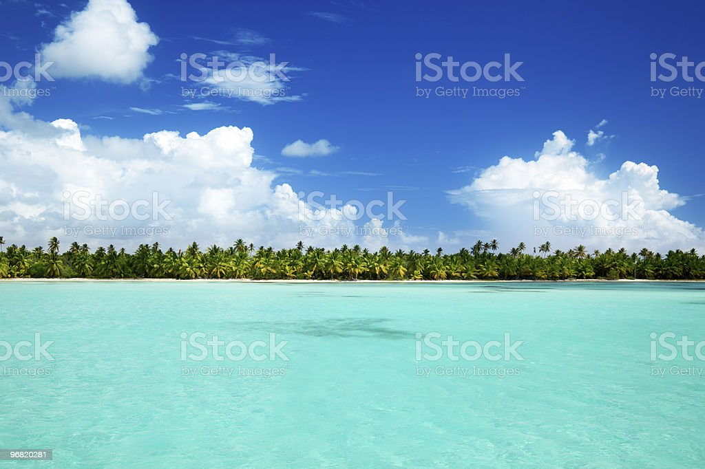 palms and caribbean sea royalty-free stock photo