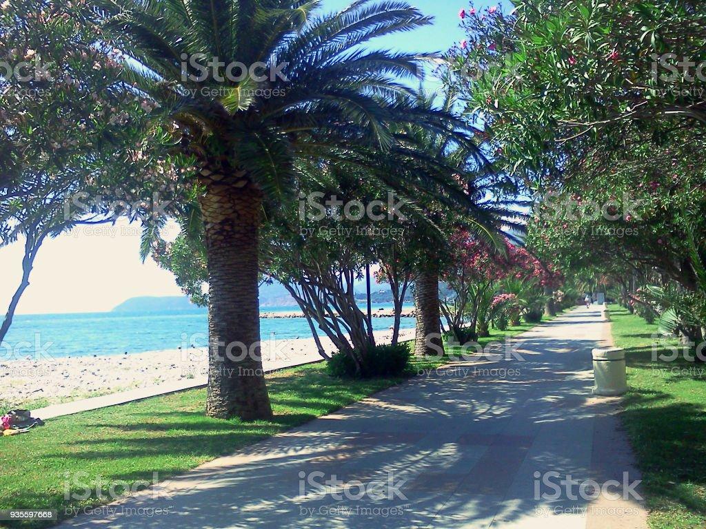 palmeras y adelfas. pista - foto de stock