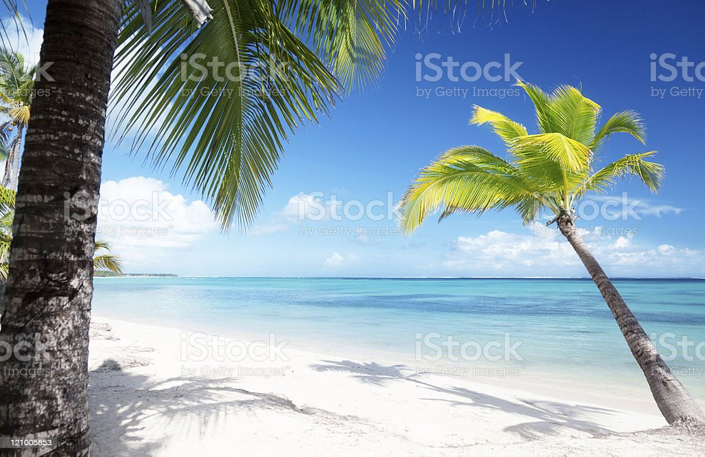 palms and sea royalty-free stock photo