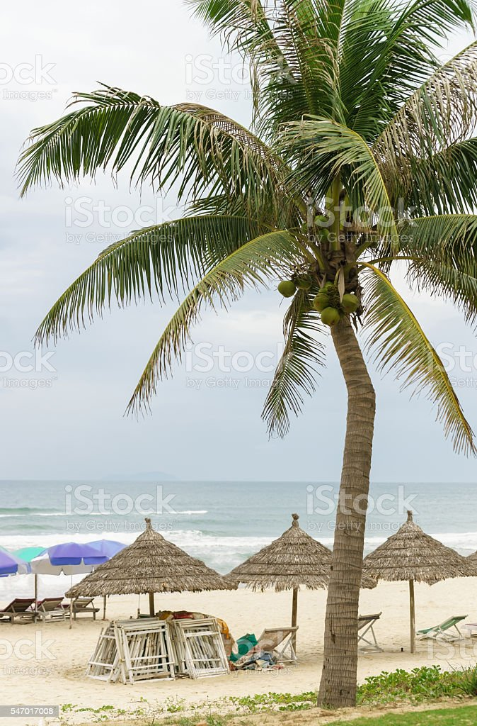 Palms and sunbeds at China Beach in Da Nang stock photo