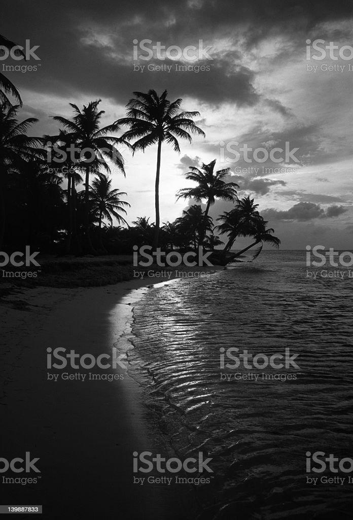 Palms at nightfall stock photo