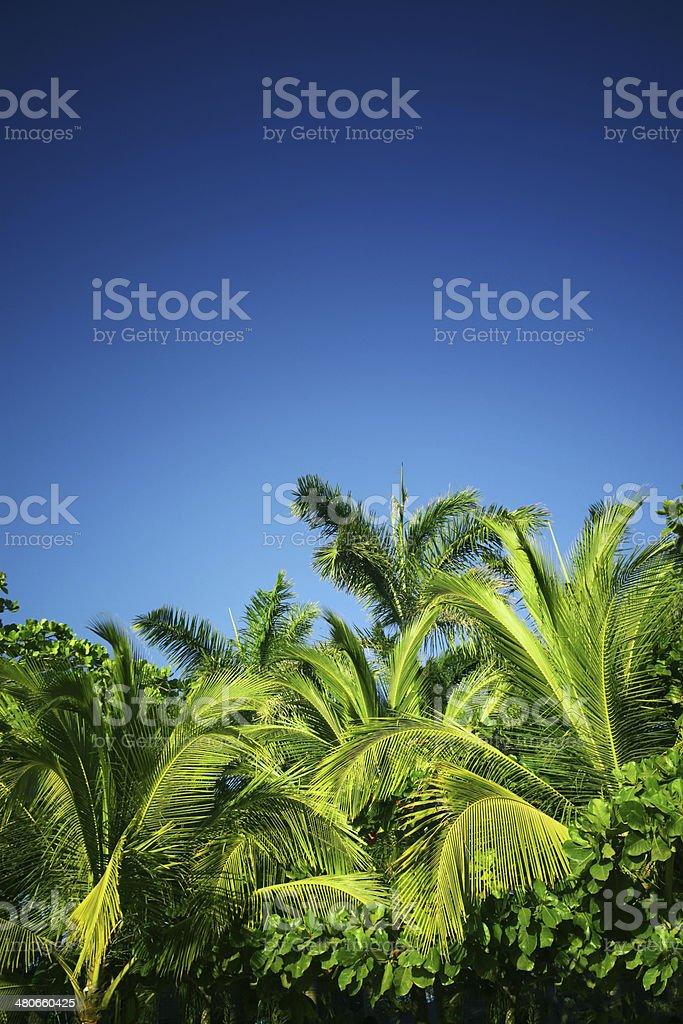 Palms Background royalty-free stock photo