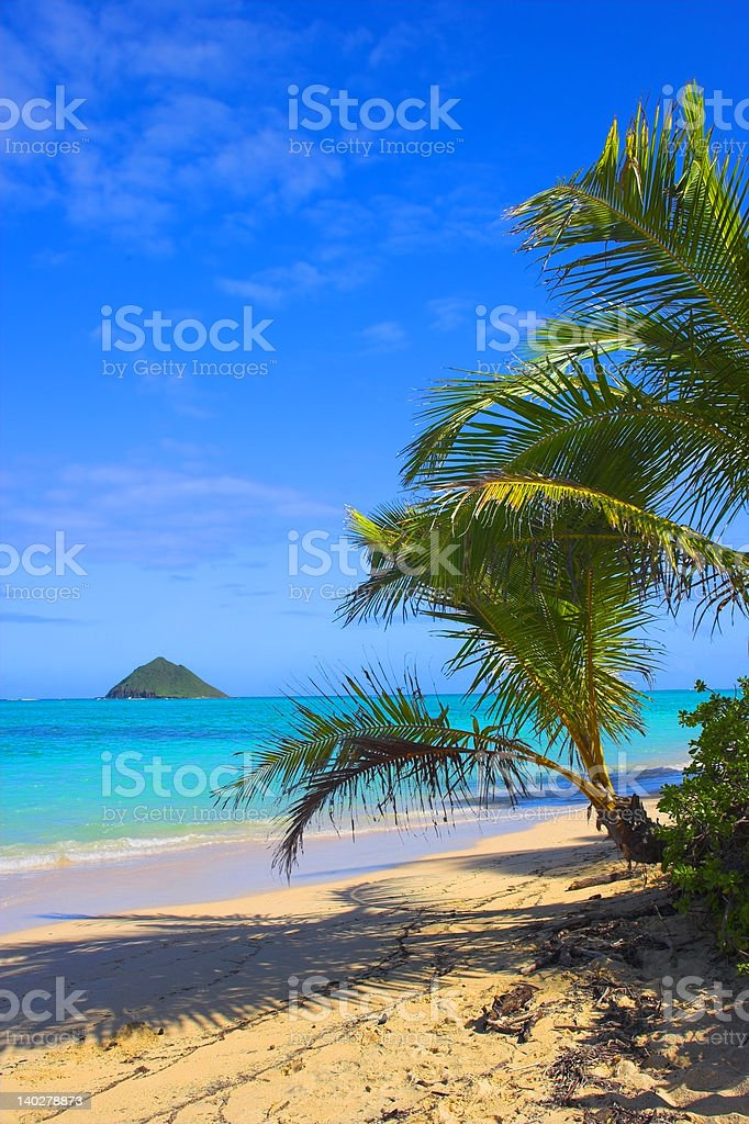 Palms by the beach royalty-free stock photo