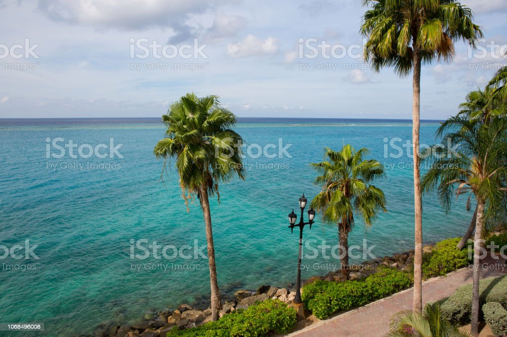 Palms by the ocean along the promenade in Oranjestad Aruba stock photo