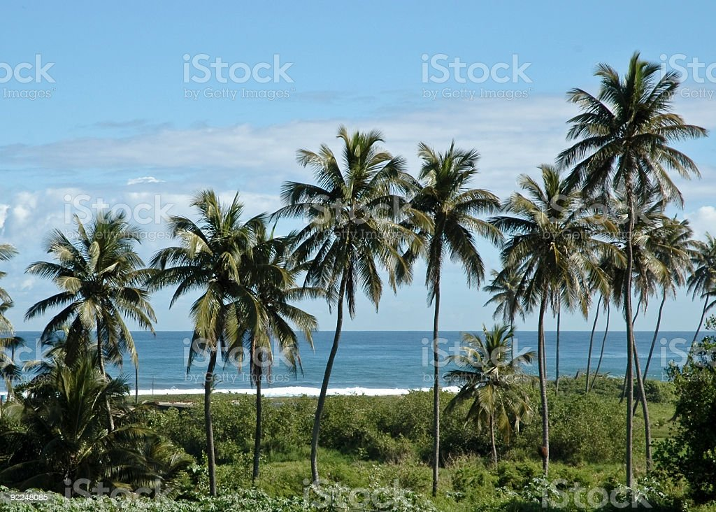 Palms by the Sea stock photo
