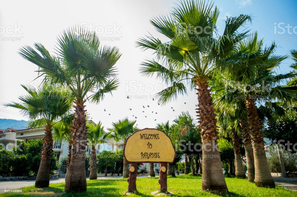 Palms in a Turkish village. Plate with the inscription Welcome to Paradise stock photo