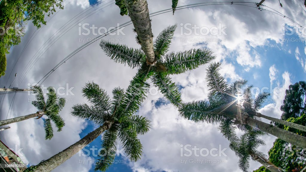 palms in angular perspective stock photo