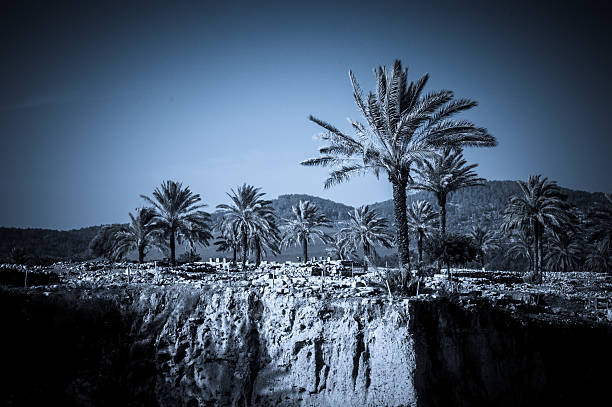 Palms in Armageddon, Israel – Foto
