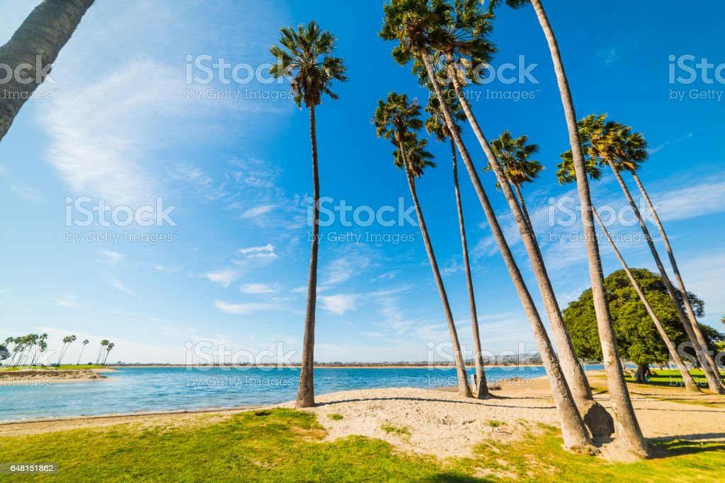 Palms in Mission Bay stock photo