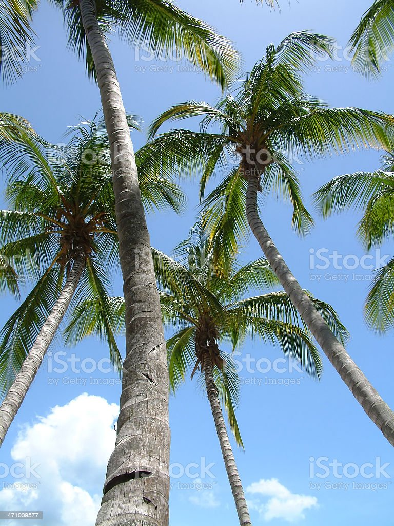 Palms in paradise royalty-free stock photo