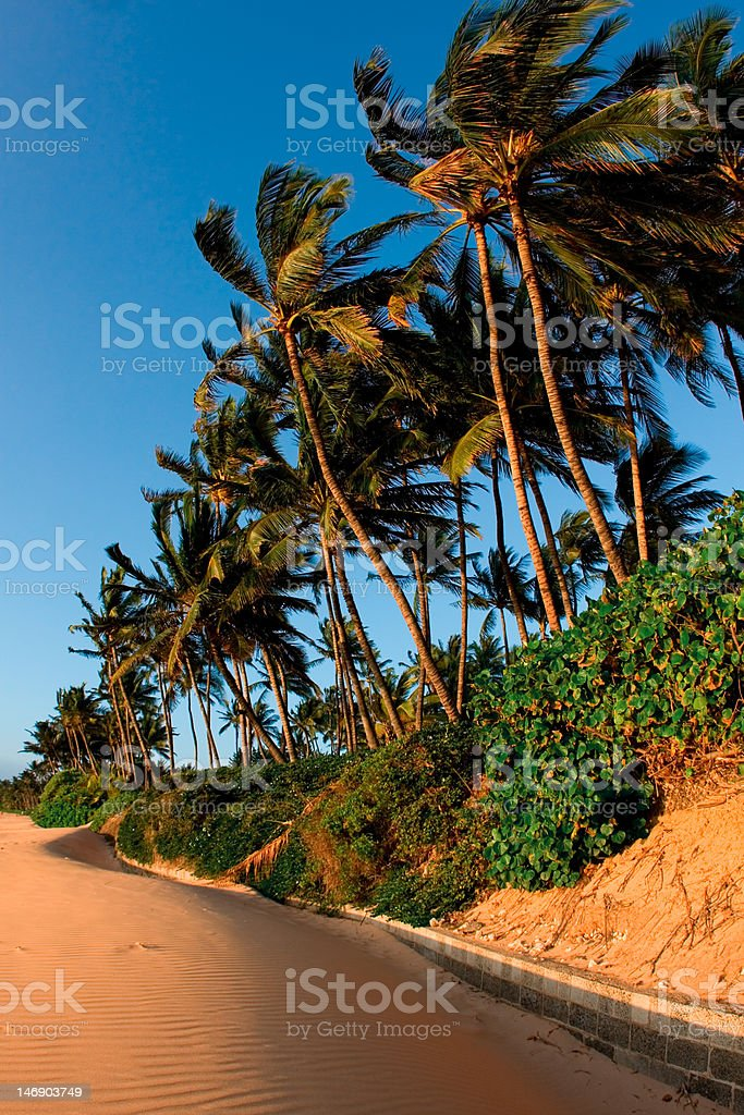 Palms In The Wind stock photo