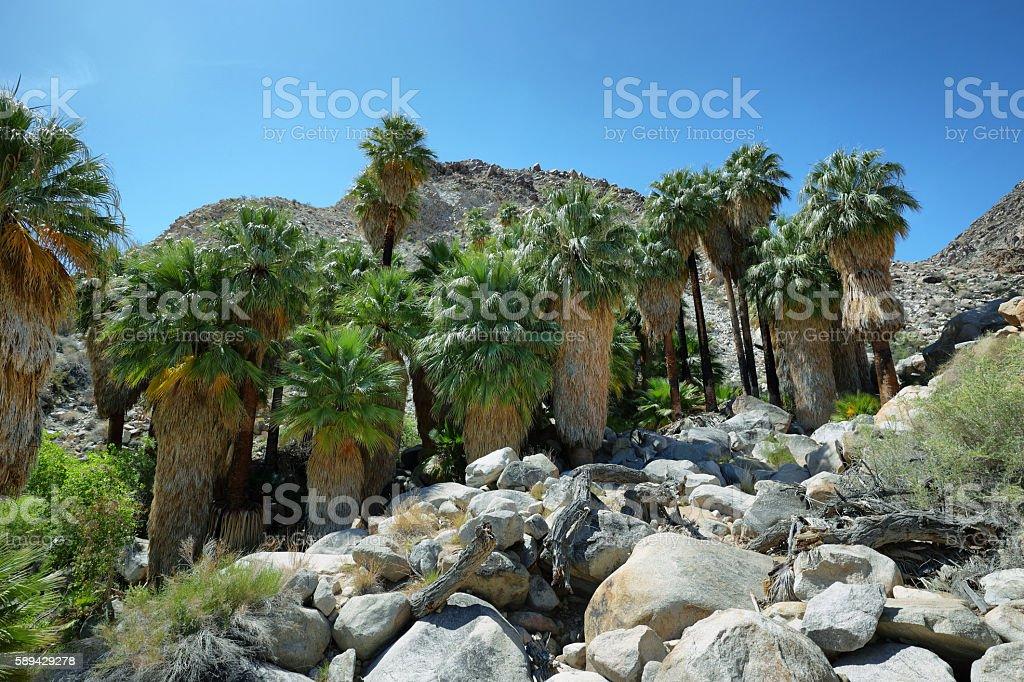 49 palms Oasis in Joshua Tree National Park stock photo