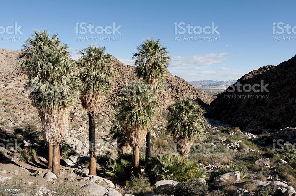 49 Palms Oasis royalty-free stock photo