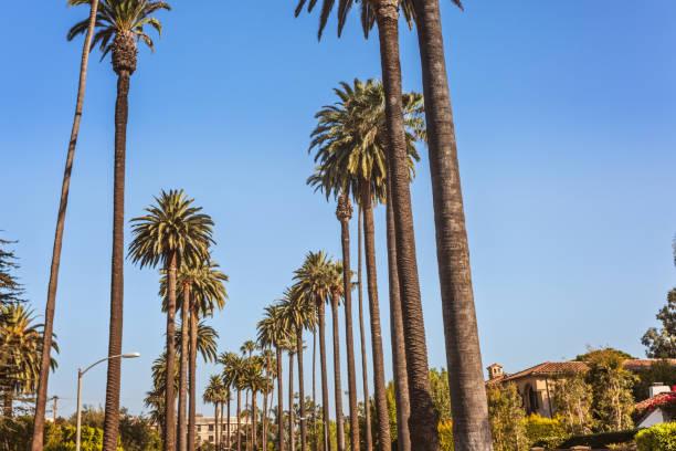 handflächen von beverly hills - süd kalifornien stock-fotos und bilder