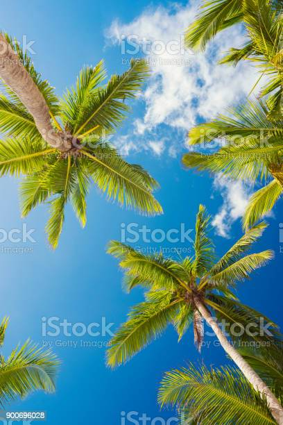 Photo of Palms of Dominican Republic