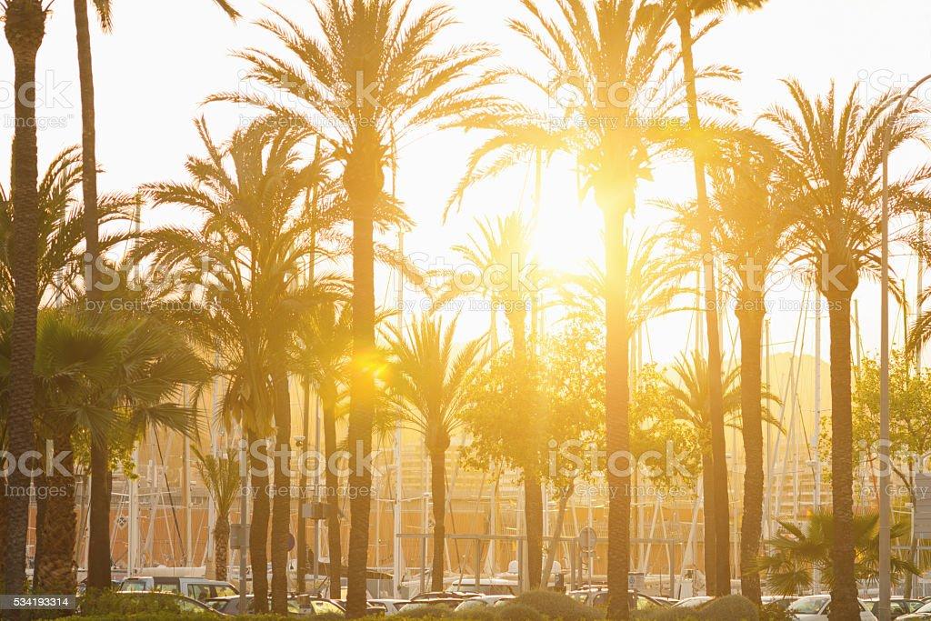 Palms of Palma de Mallorca harbor in sunset stock photo