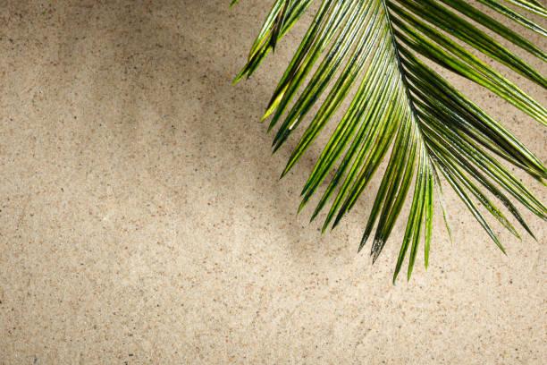Palmen des Palmsonntags auf dem Sandhintergrund – Foto