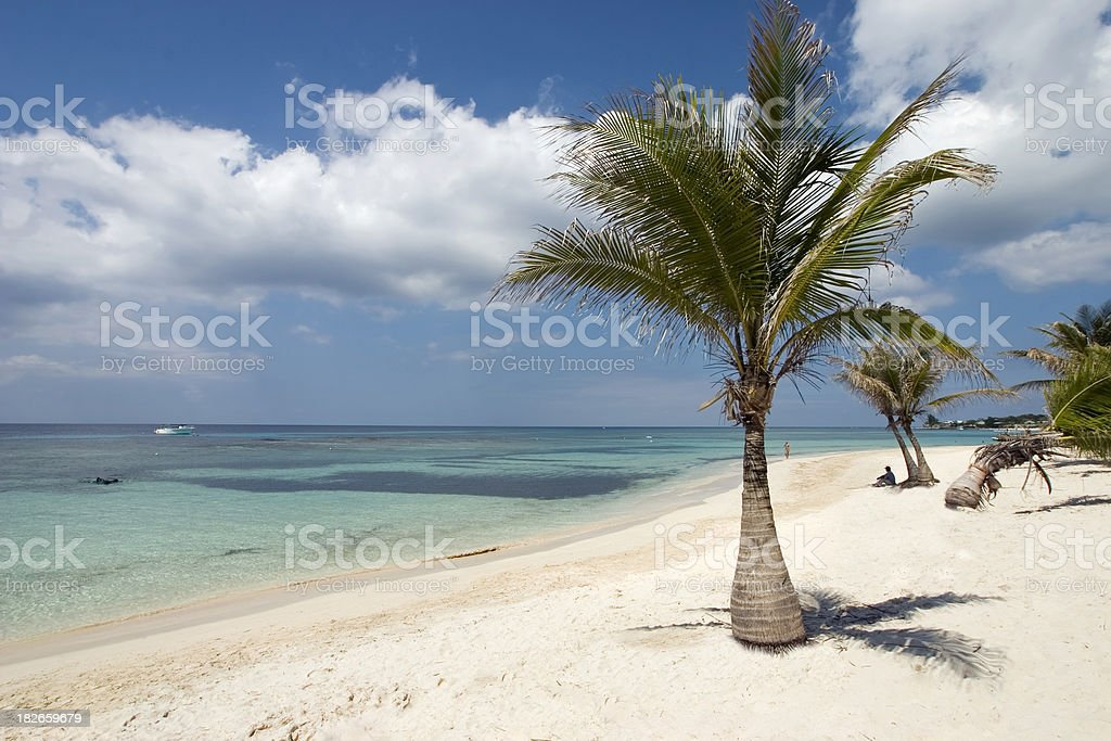 Palms on Beach royalty-free stock photo