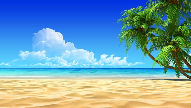 Palms on empty idyllic tropical sand beach stock photo
