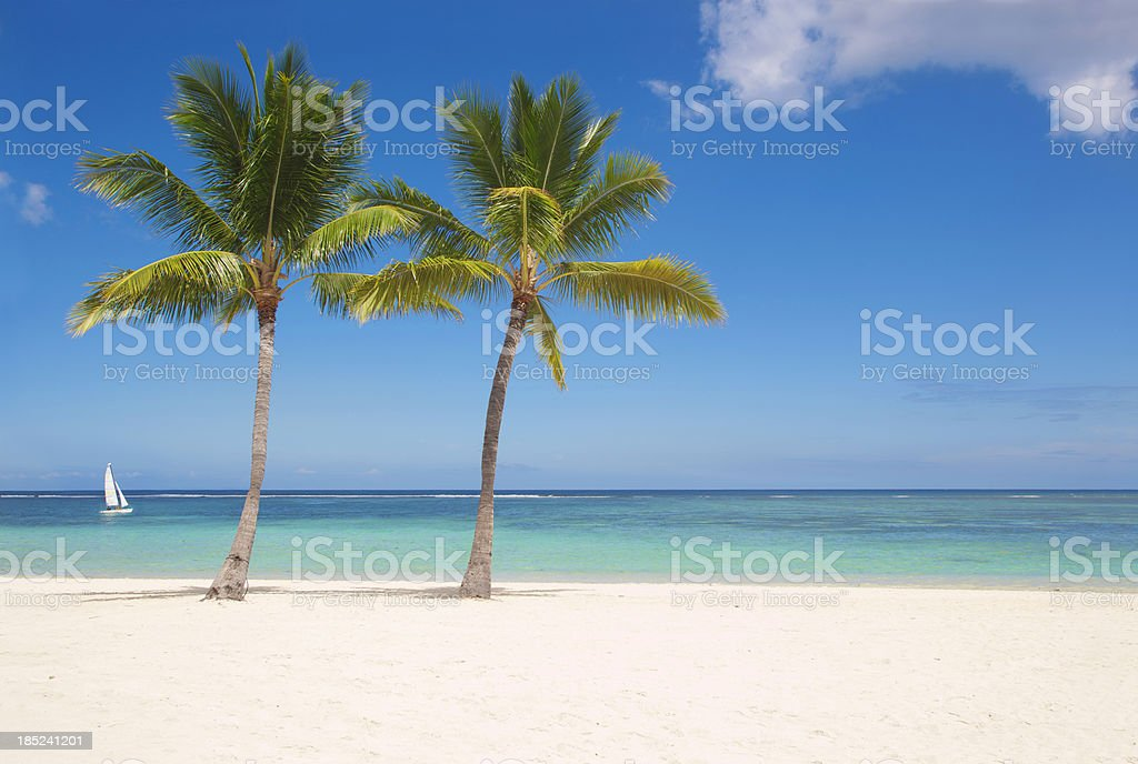 Palms on Mauritius stock photo