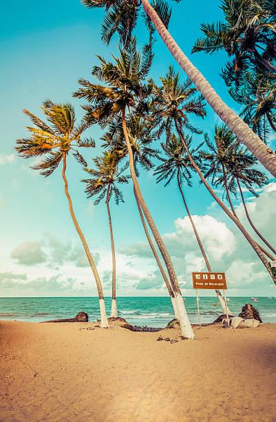 Palms on the Beach of Maracajau, Brazil stock photo