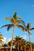 Palms on the beach against blue sky