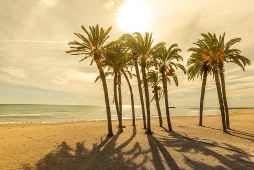 Palms on the beach with sun light