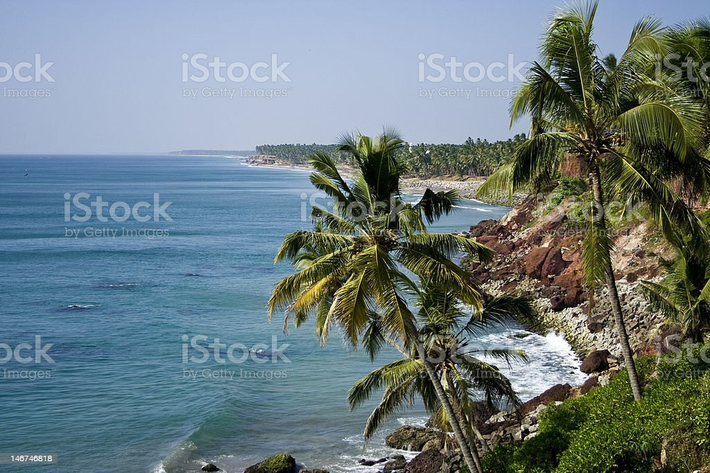 Palms on the cliff stock photo