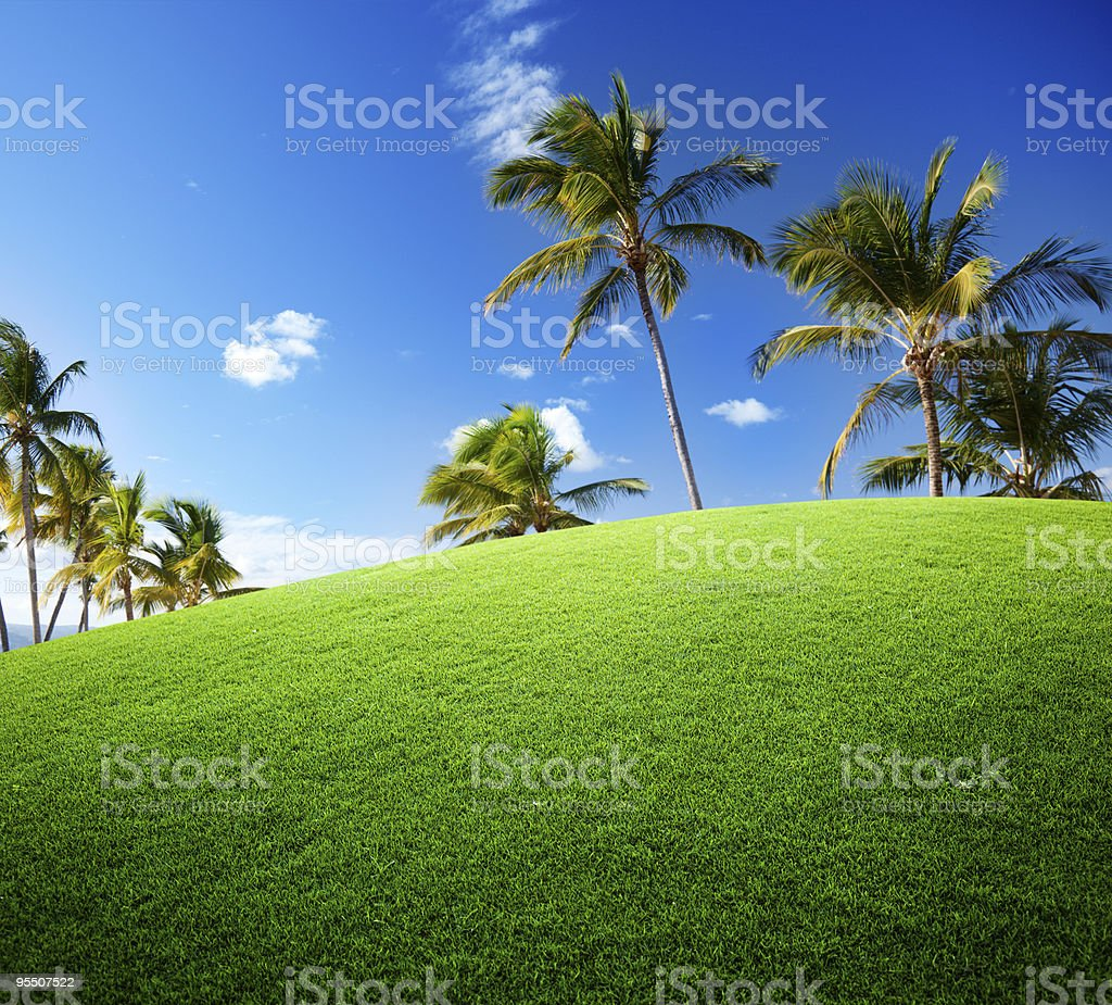 palms on the field royalty-free stock photo