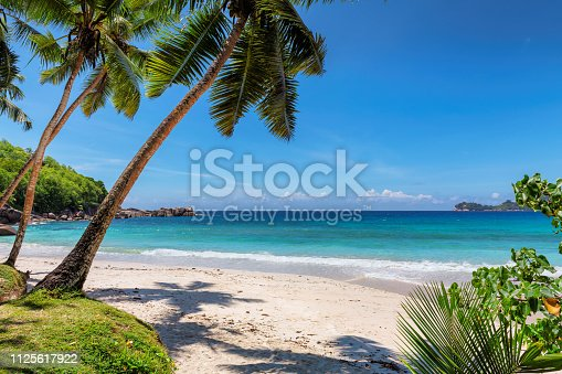 Palms on tropical beach with white sand. Summer vacation travel holiday background concept. Caribbean paradise beach.