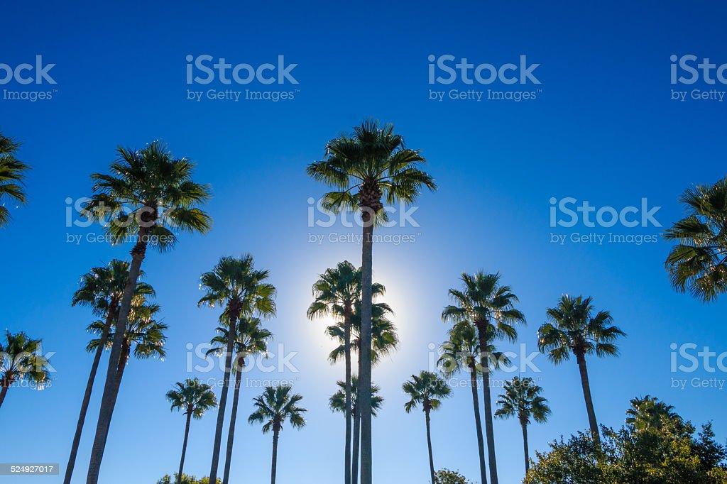 Palms stock photo