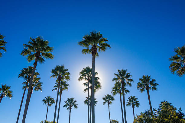 palms - orlando florida photos stock photos and pictures