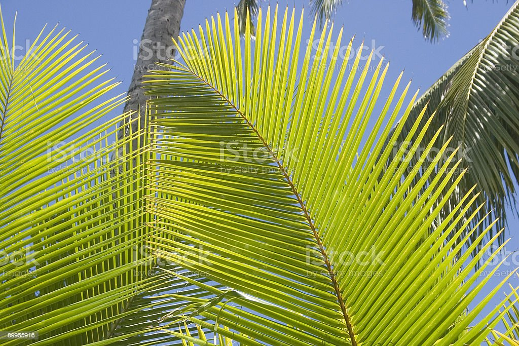 Palms - Royalty-free Big Island - Hawaii Islands Stock Photo